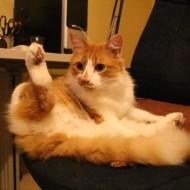 猫に学ぶ人生哲学