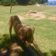 犬好きのためのオージー的元旦の過ごし方