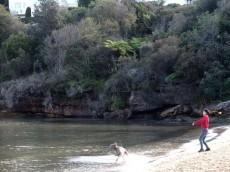 犬とビーチで大興奮@Sirius Cove