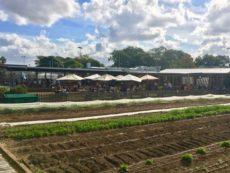 Acre Eatery-ファームレストランで青空ランチ