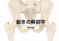 動きの解剖学6回講座(9~11月)